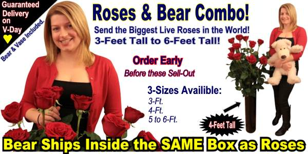 Send a giant Valentine's Day Gift that features the biggest live roses in the world and an adorable teddy bear that is all shipped inside of one giant box with guaranteed delivery on Valentine's Day!